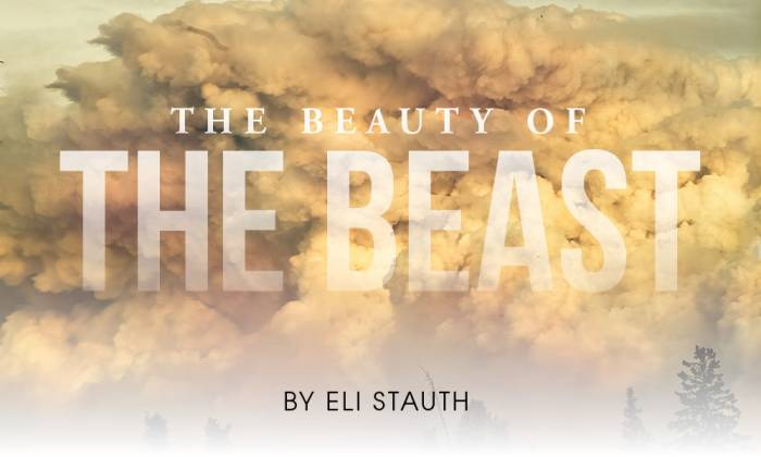 The Beauty of The Beast