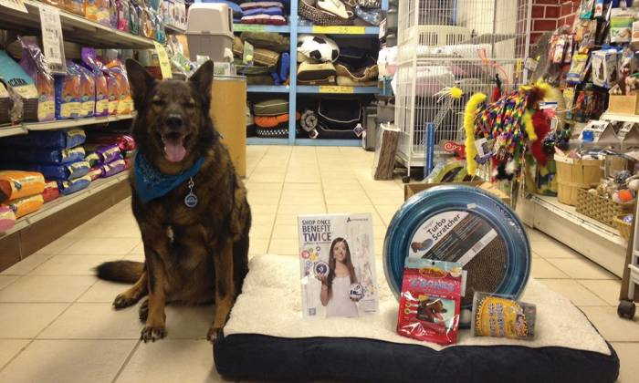 Local Gift Picks for Pets